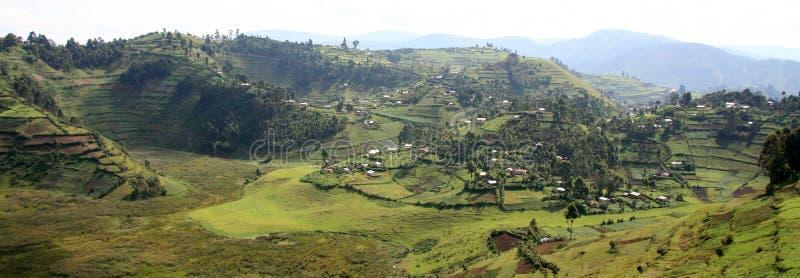 米领域在乌干达,非洲 免版税库存图片