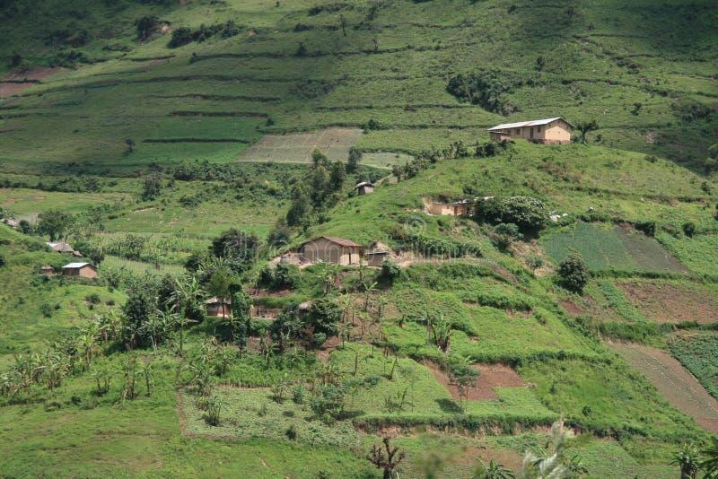 米领域在乌干达,非洲 免版税图库摄影