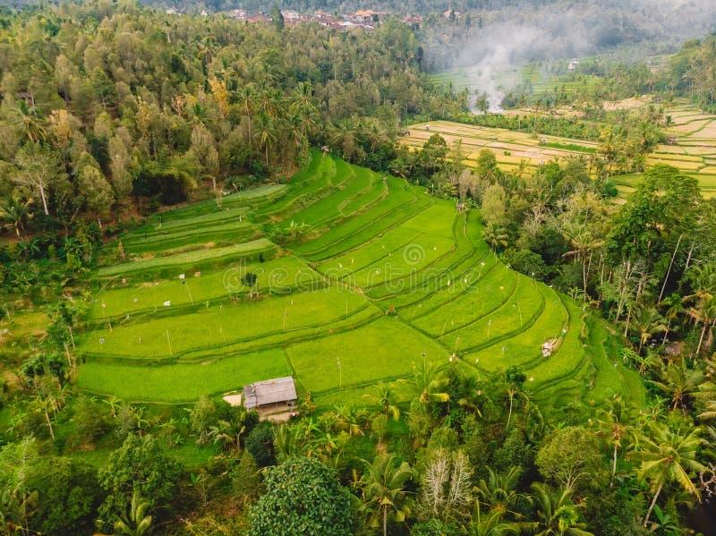 米领域在巴厘岛 与大阳台的鸟瞰图 免版税库存图片