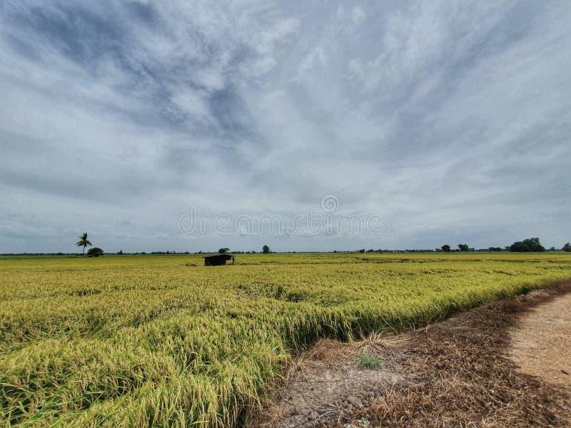 米领域在泰国的中心 免版税库存图片