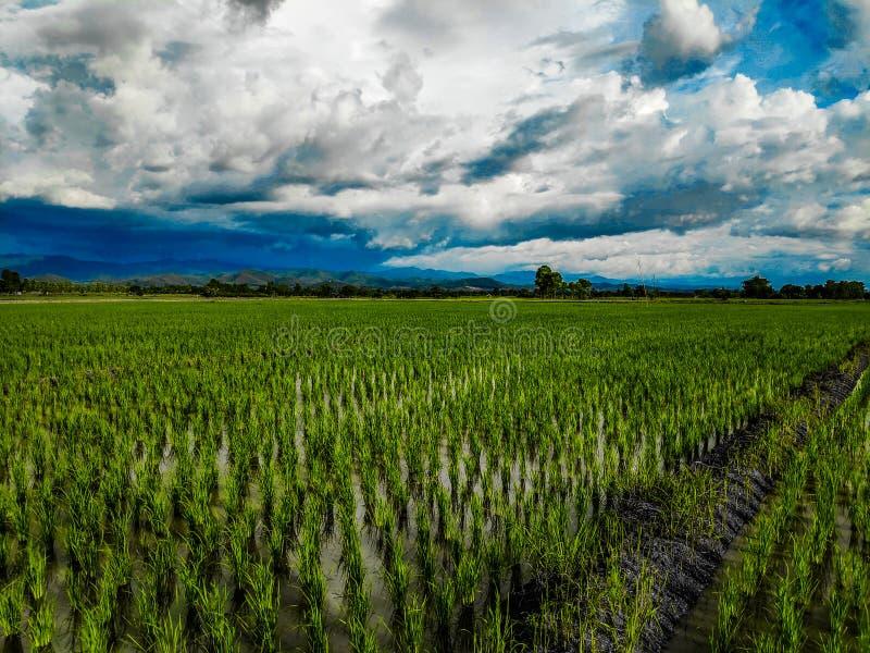 米领域在种田以后 图库摄影