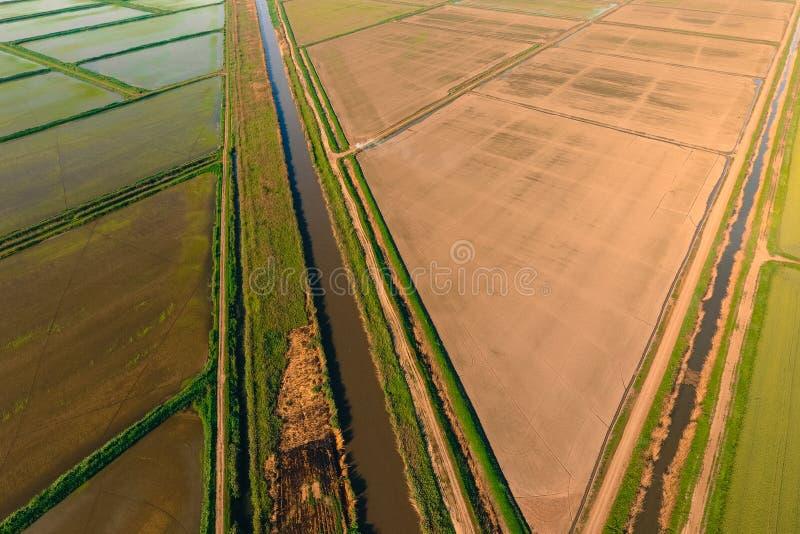 米领域用水充斥 被充斥的稻米 种植在领域的米农业方法  图库摄影