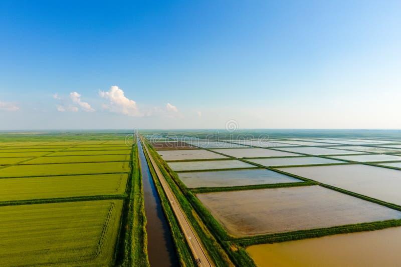 米领域用水充斥 被充斥的稻米 种植在领域的米农业方法  库存图片