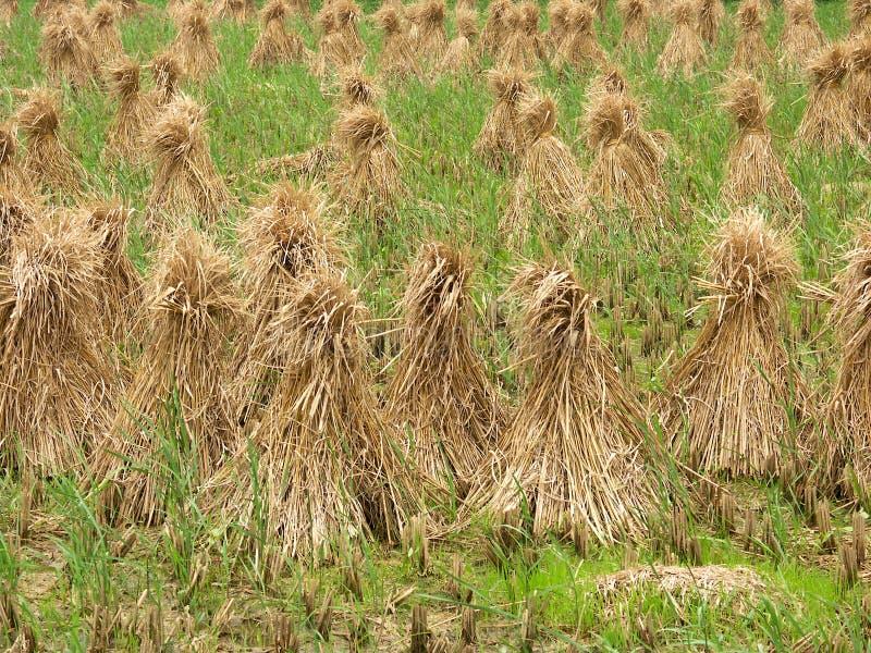 米领域的干草堆 图库摄影