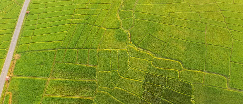 米领域美好的风景  免版税图库摄影