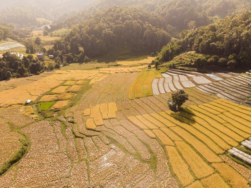 米领域鸟瞰图大角度米领域在农村泰国 免版税库存图片