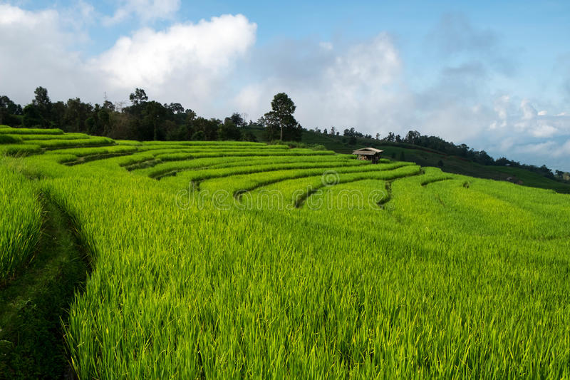 米领域,与美好的风景的农村山景 图库摄影