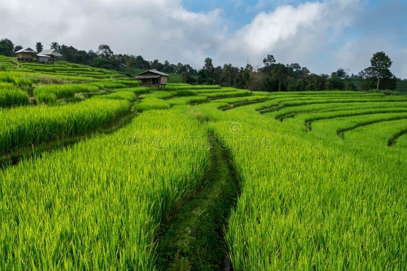 米领域,与美好的风景的农村山景 免版税图库摄影
