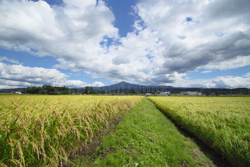 米领域Mt.Iwate和横向  库存照片