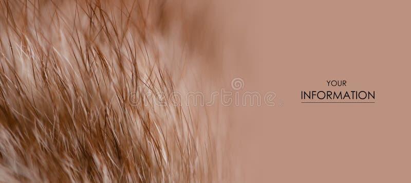 米黄红色毛皮宏观绒毛纹理细节自然样式 库存图片