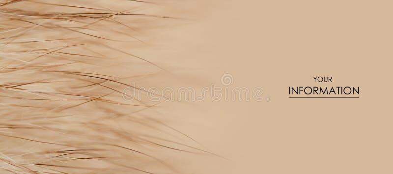 米黄黄色毛皮宏观绒毛纹理细节自然样式 免版税图库摄影