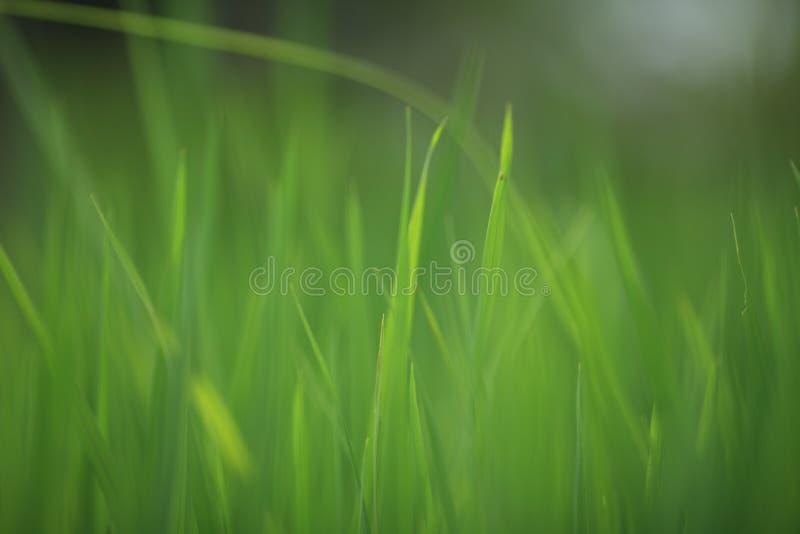 米绿色射击  免版税库存照片