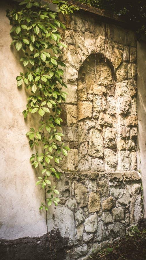 类似一个城堡窗口,与美丽的常春藤和有趣的光的一个石墙 免版税库存照片
