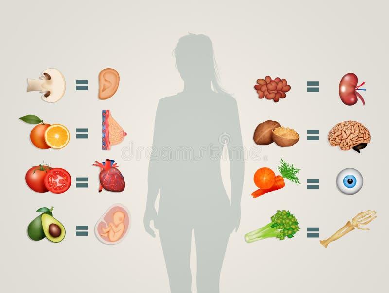 类似食物的器官 库存例证