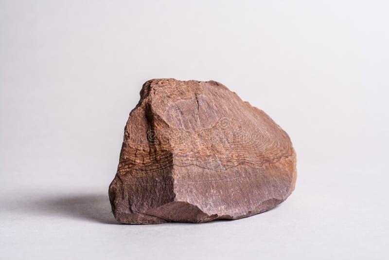 粉砂岩根瘤 库存照片