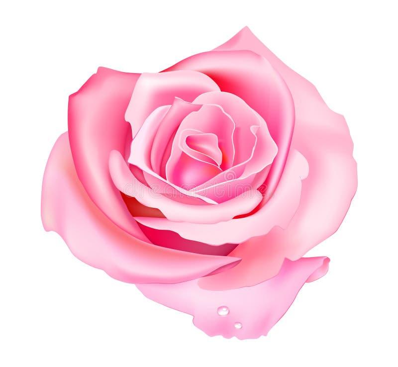 粉红色上升了 皇族释放例证