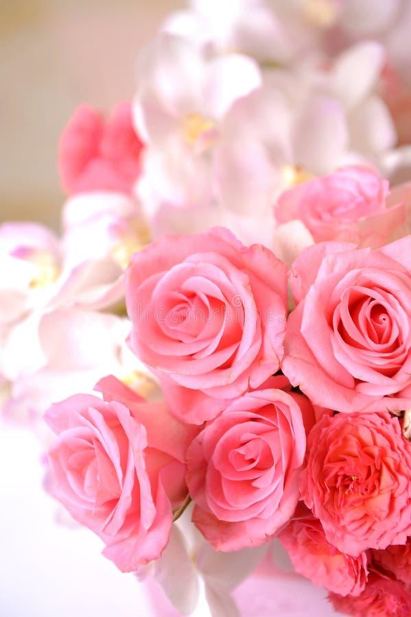 粉红色特写镜头上升了 库存图片