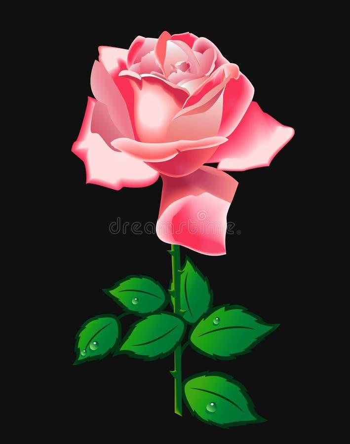 粉红色玫瑰色向量 向量例证