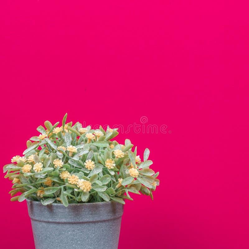 粉红色背景上的假树 库存照片