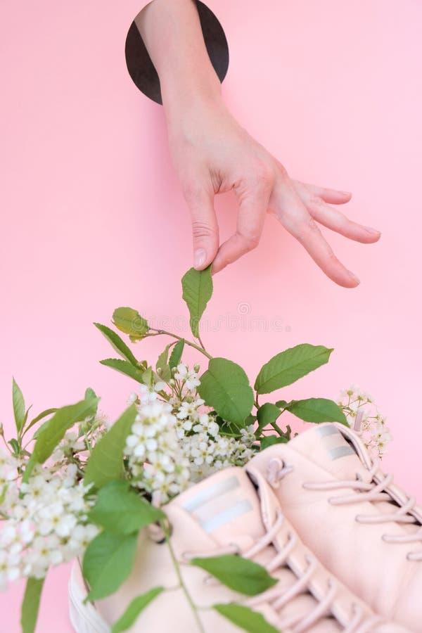 粉红色背景中的粉色运动鞋樱花 免版税图库摄影