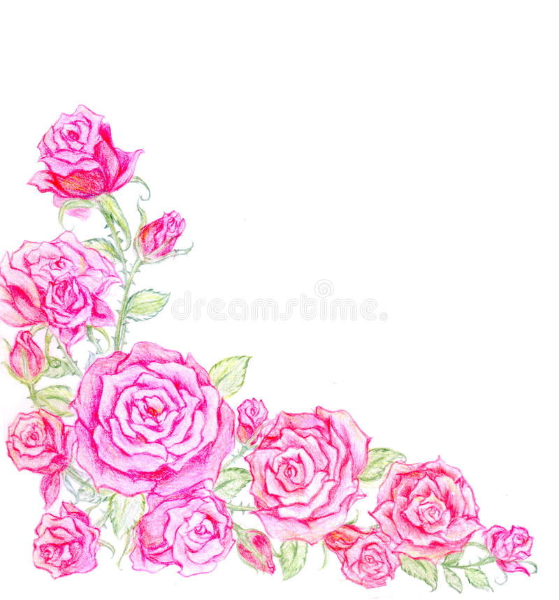 粉红英国兰开斯特家族族徽花刷子  皇族释放例证