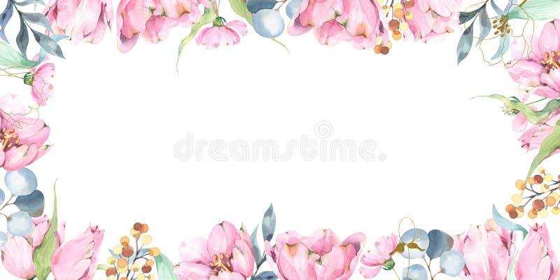 粉红郁金香野生花、桉树、早发和叶春水平矩形框组合物 皇族释放例证