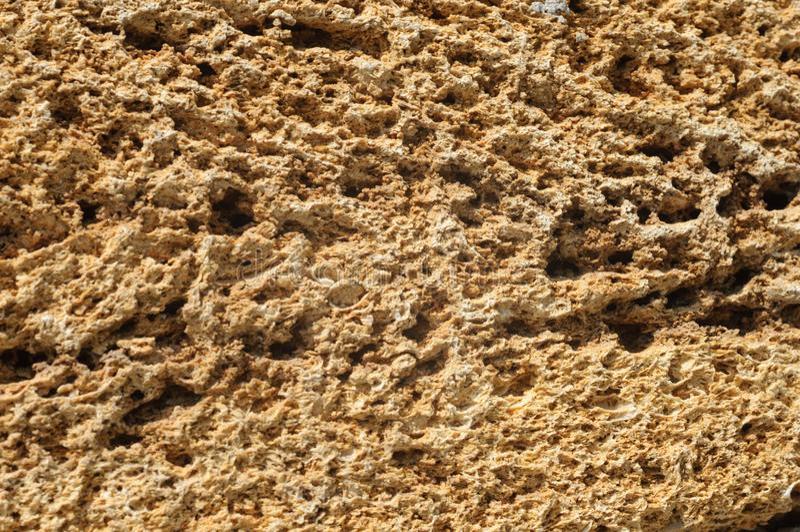 粗砺的砖纹理由贝类制成 库存照片