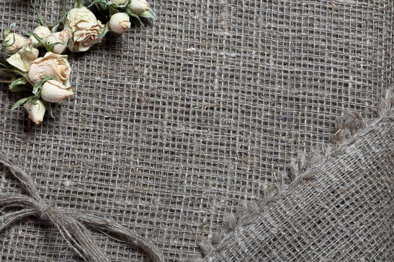 粗糙的亚麻制织品 对此是干米黄玫瑰和亚麻制螺纹弓  库存图片