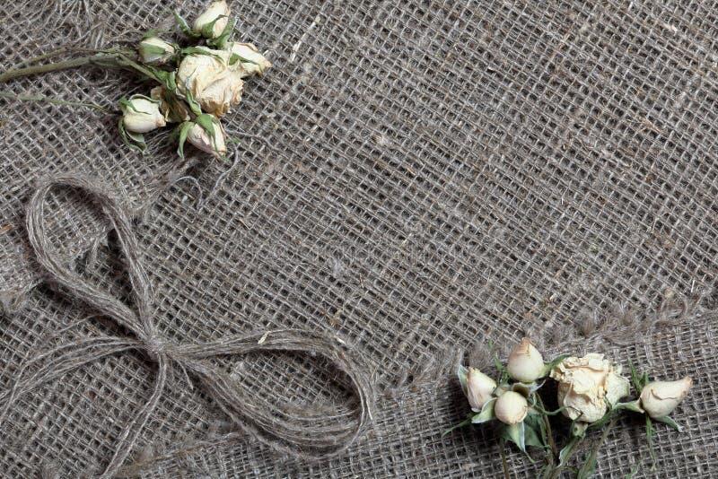 粗糙的亚麻制织品 对此是干米黄玫瑰和亚麻制螺纹弓  免版税库存图片