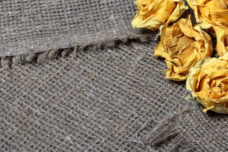粗糙的亚麻制织品 对此是干黄色玫瑰 库存照片
