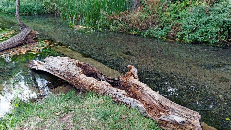 粗糙的老树注册浅河,希腊 免版税库存图片