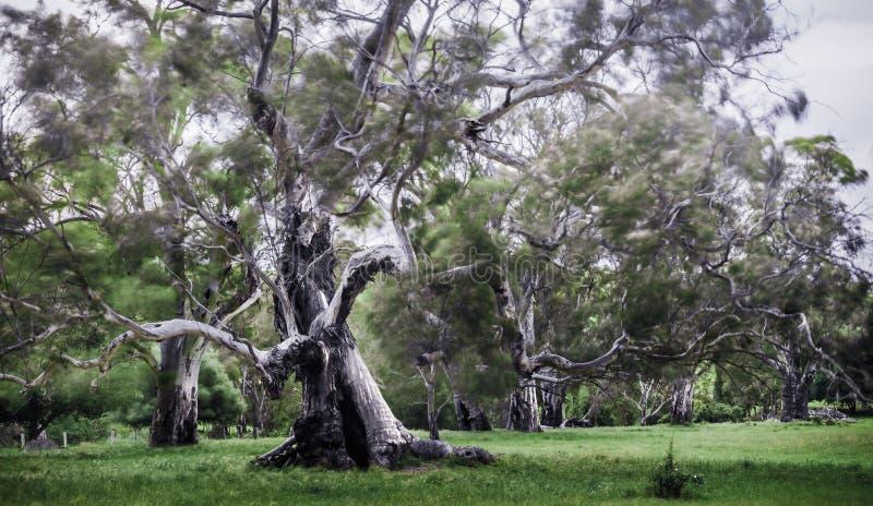 粗糙的老结构树 免版税库存照片