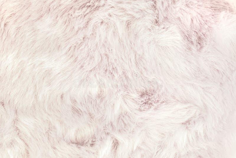 粗野的毛皮背景纹理  软的长毛的皮肤材料细节  图库摄影