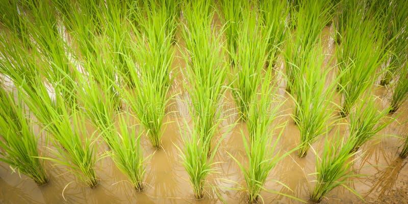 粮食作物树 免版税库存照片