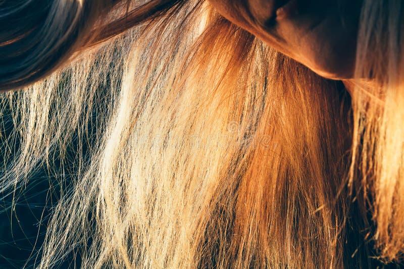 精密白肤金发的妇女头发的关闭,健康头发概念 库存照片