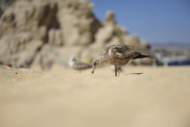 精梳机沙子 库存图片
