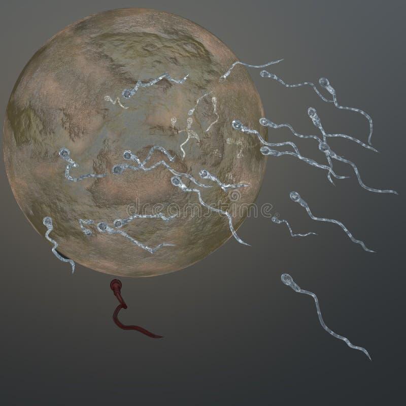 精液施肥卵子 皇族释放例证