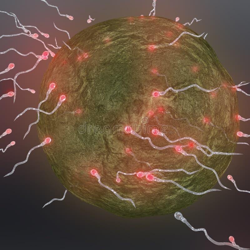 精液施肥卵子 库存例证