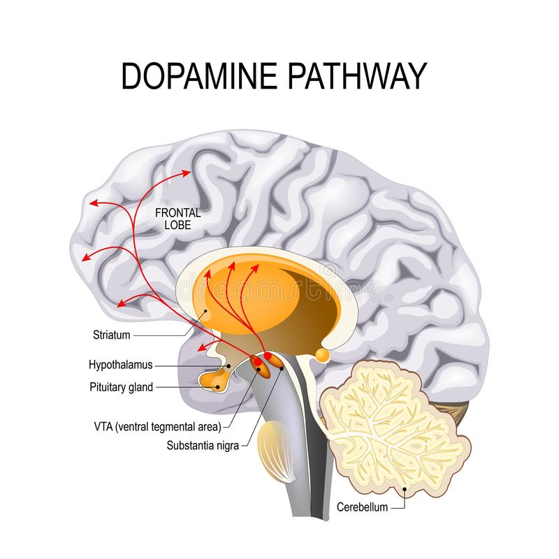 精神分裂症多巴胺假说  库存例证