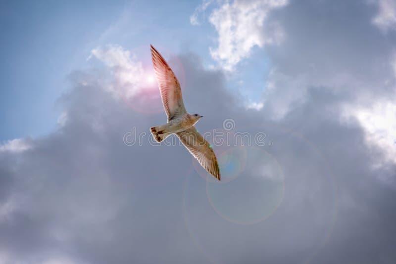 精神鸟飞行 库存图片