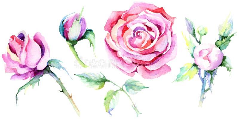 精美粉红色上升了 花卉植物的花 被隔绝的野生春天叶子野花 向量例证
