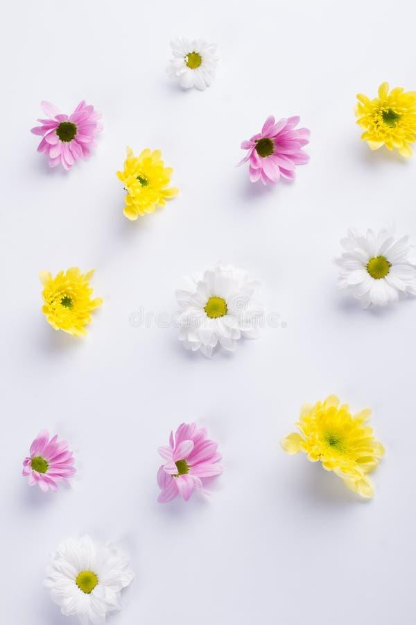 精美花卉背景 图库摄影