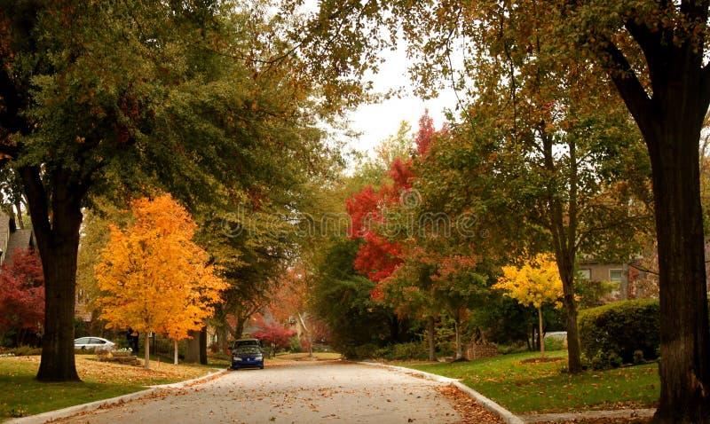 精采多色秋天林木线有色的叶子的邻里街道 免版税库存图片