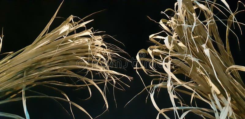 糖凯因夜黑色自然 库存照片