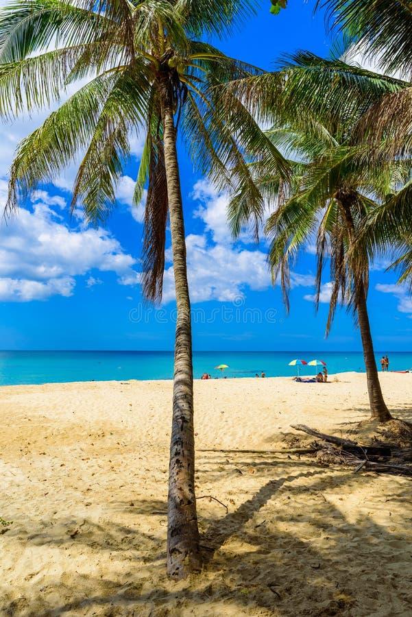 素辇海滩、天堂海滩与金黄沙子,水晶水和棕榈树,芭东区地区在普吉岛海岛上,热带旅行 免版税库存图片