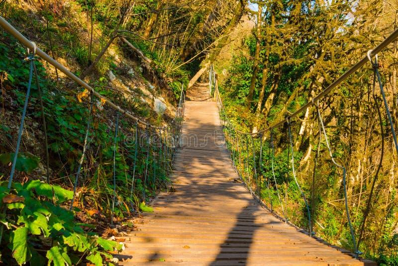 索桥在赤柏松和箱子树树丛,索契,俄罗斯里 库存图片