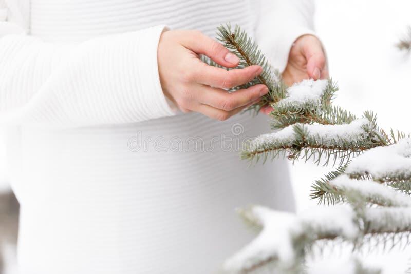 紧密拿着与雪的妇女的手圣诞树在晴朗的冬日 假日概念 免版税图库摄影
