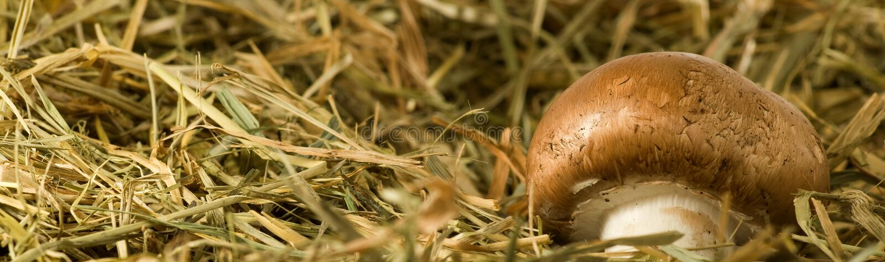 紧密蘑菇蘑菇的图象 图库摄影