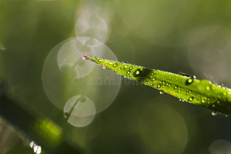 紧密露水在草甸早晨天 免版税库存图片