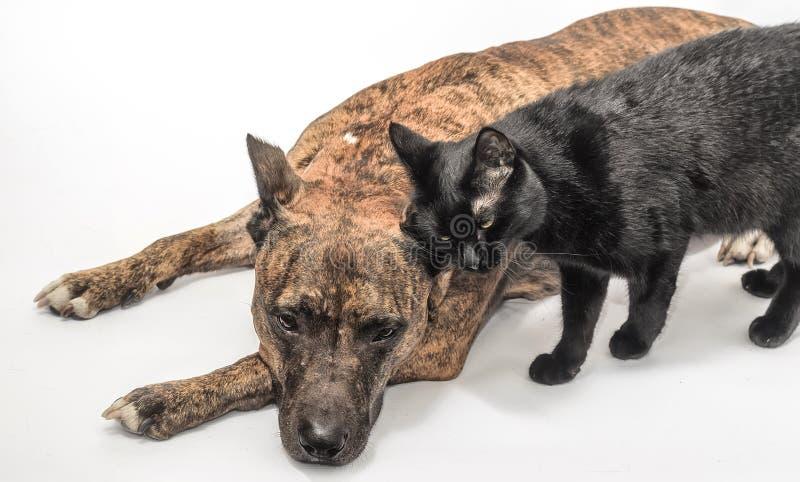 紧密,一起说谎在地板上的猫和狗 库存照片